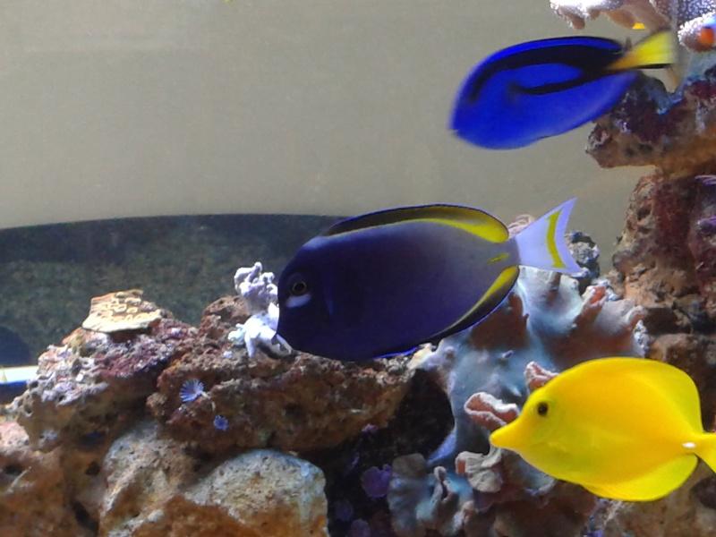 aquarium 1000l 20141018