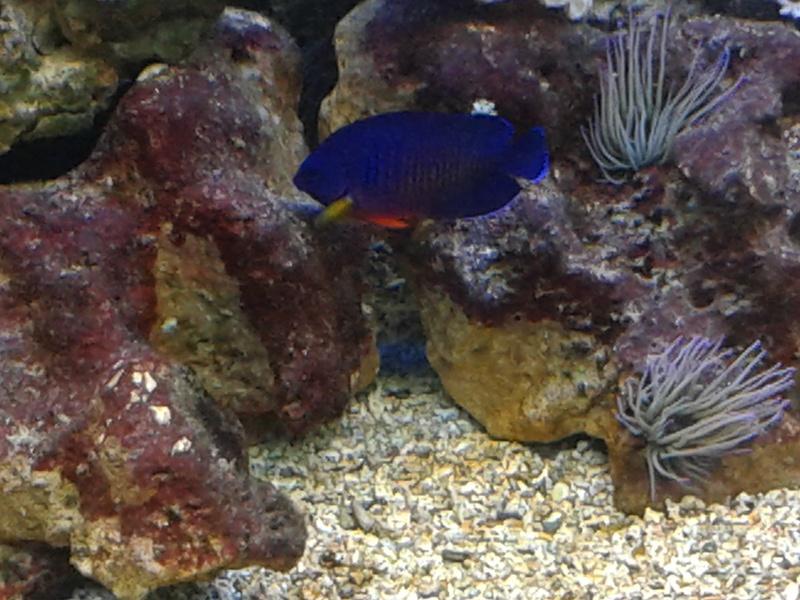 aquarium 1000l 20141021