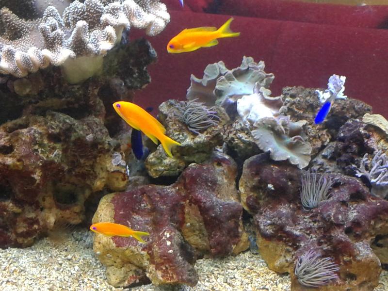 aquarium 1000l 20141022