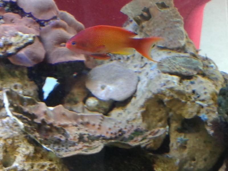 aquarium 1000l 20141023