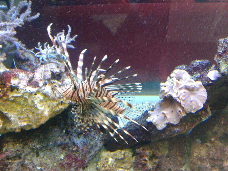 aquarium 1000l 20141024