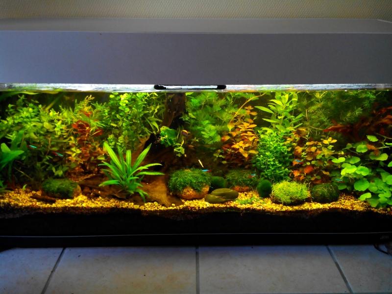 Aquarium de 300 litres en aquascaping ou hollandais! Img_2011