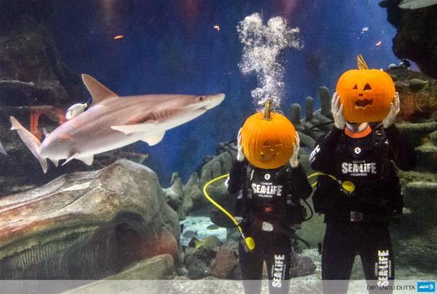 @VendrediEtMoi #VendrediEtMoi #CommunityManager : #Halloween pour les #plongeur s de l'#aquarium de #Londres 7mxhs10