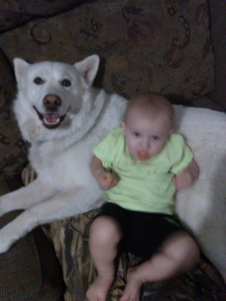 """Another """"is my husky purebred"""" thread 10535610"""
