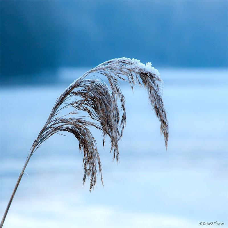 Concours de décembre: La glace dans tous ses états _mg_1210