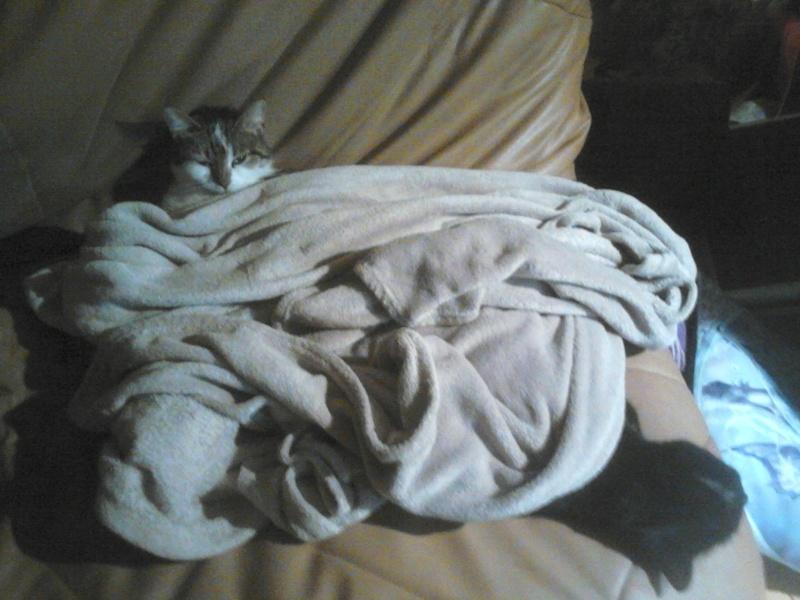 INZ0, chat européen, robe noire, né le 01/09/2013 Dsc_0015