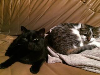 INZ0, chat européen, robe noire, né le 01/09/2013 Img_4314