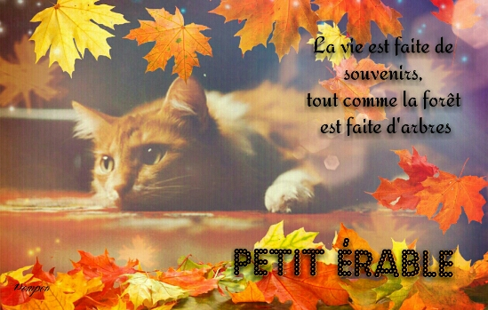 Petit Érable- Chaton- femelle Erable10
