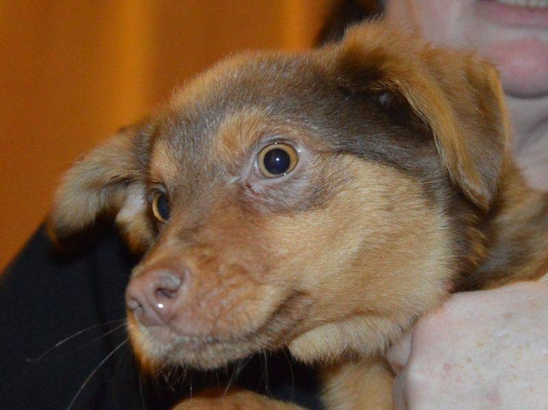 SOLARI, chiot femelle x berger australien, née env août 2014 (Pascani) - adoptée par Abysse_Bybysse (92) - Page 4 710