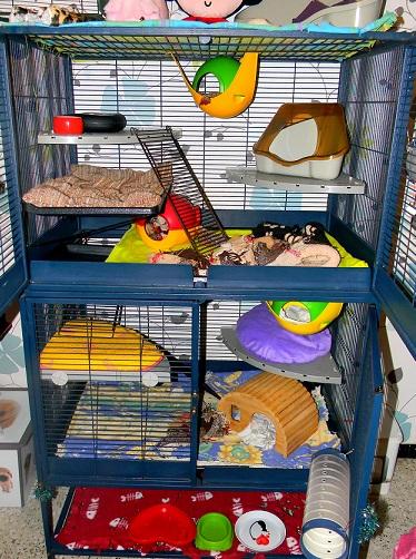 Photos de vos cages - Page 3 Dscn9737