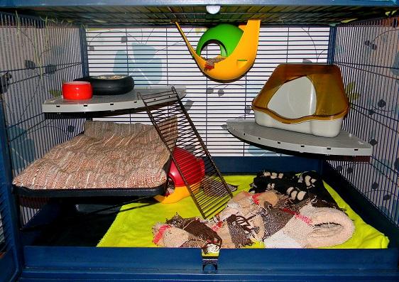 Photos de vos cages - Page 3 Dscn9739