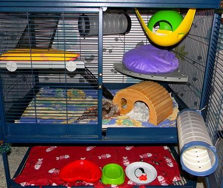 Photos de vos cages - Page 3 Dscn9740