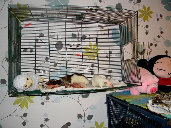 Photos de vos cages - Page 3 Dscn9743