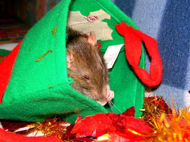 Séance photo de Noël ! ^_^ Dscn9823