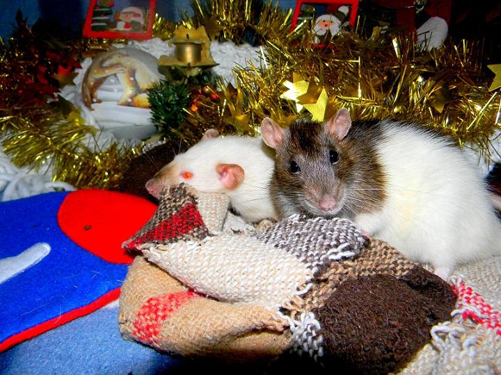 Séance photo de Noël ! ^_^ Dscn9827