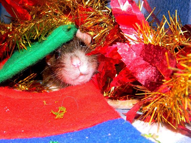 Séance photo de Noël ! ^_^ Dscn9829