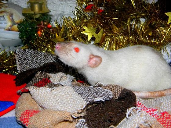 Séance photo de Noël ! ^_^ Dscn9830