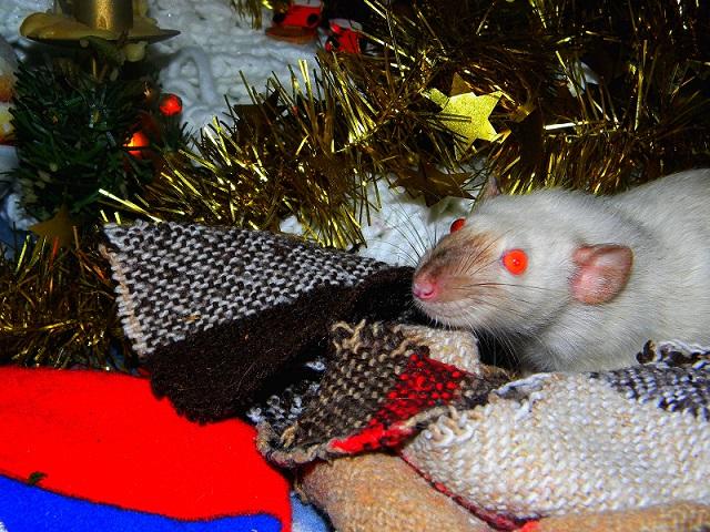 Séance photo de Noël ! ^_^ Dscn9831