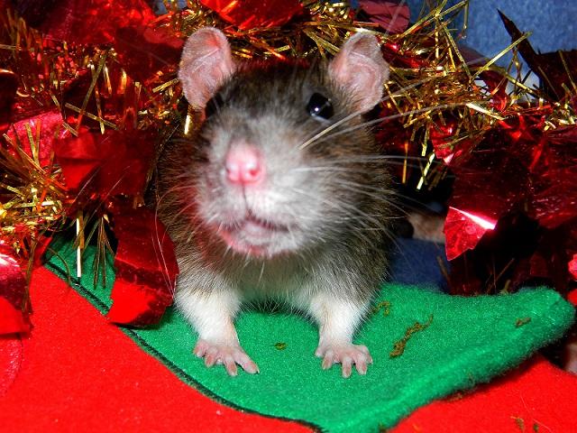Séance photo de Noël ! ^_^ Dscn9836