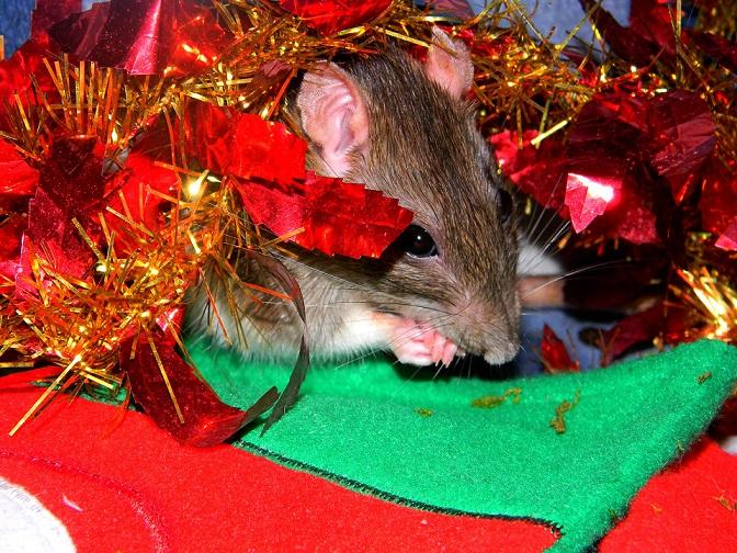 Séance photo de Noël ! ^_^ Dscn9839