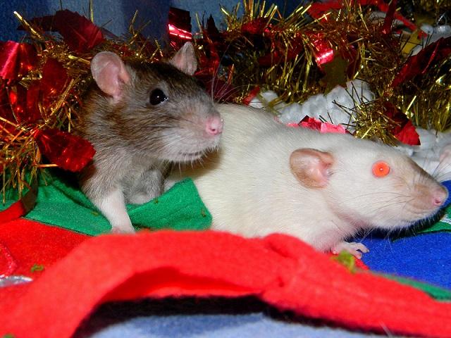 Séance photo de Noël ! ^_^ Dscn9842