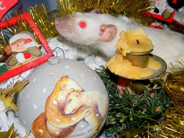 Séance photo de Noël ! ^_^ Dscn9843