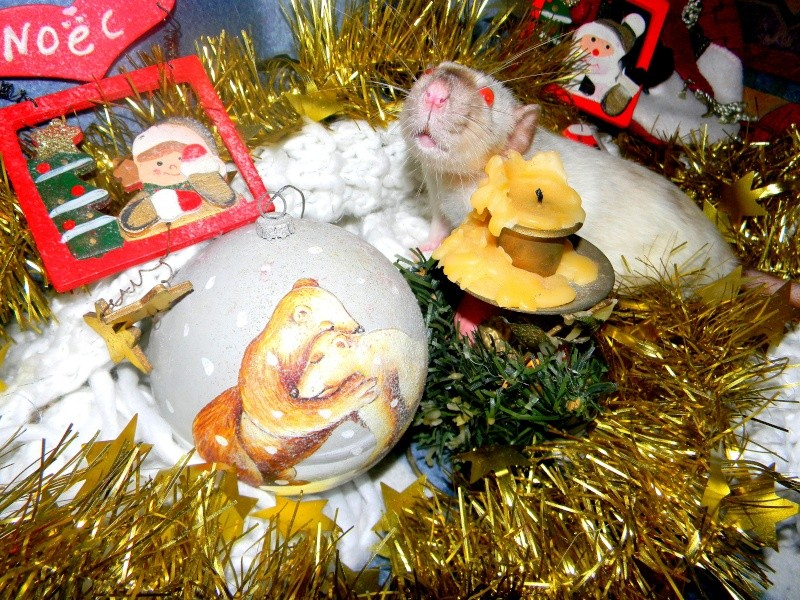 Séance photo de Noël ! ^_^ Dscn9845