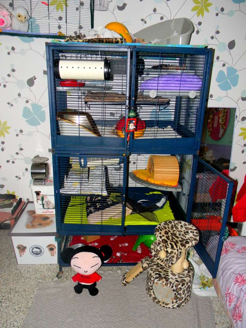 Photos de vos cages - Page 3 Dscn9913