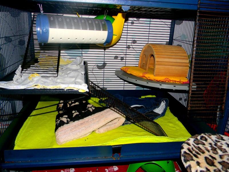 Photos de vos cages - Page 3 Dscn9915
