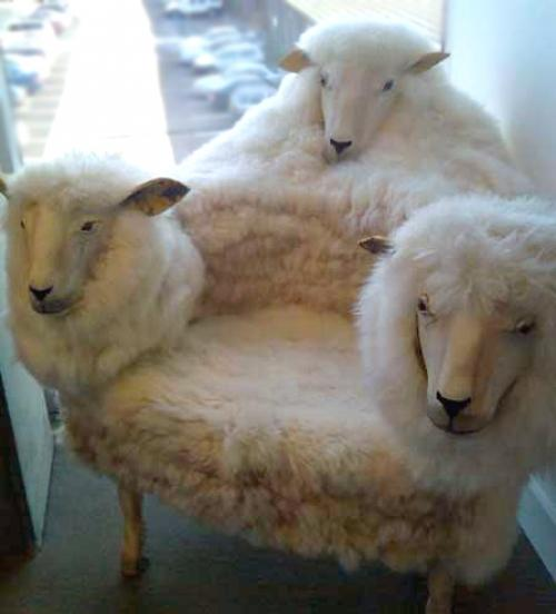 LE FIL DES INVITES Goat-c10