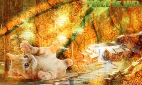 Patte de Velours et Patte de Miel, une chatonne d'eau et une chatonne d'air Perle_10