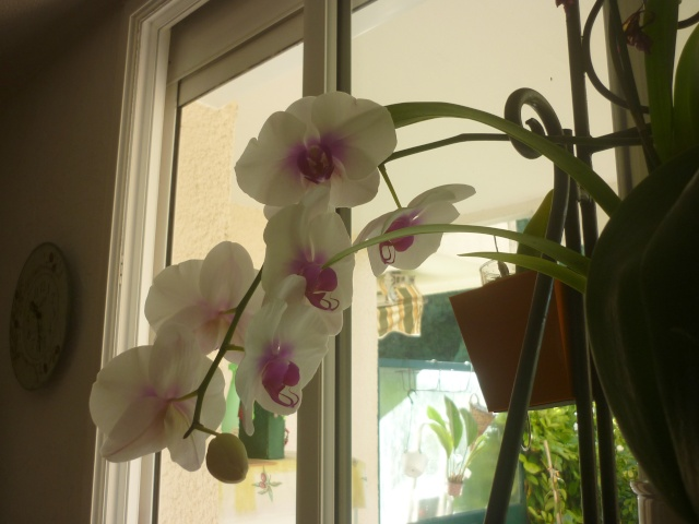 floraisons du moment P1160425
