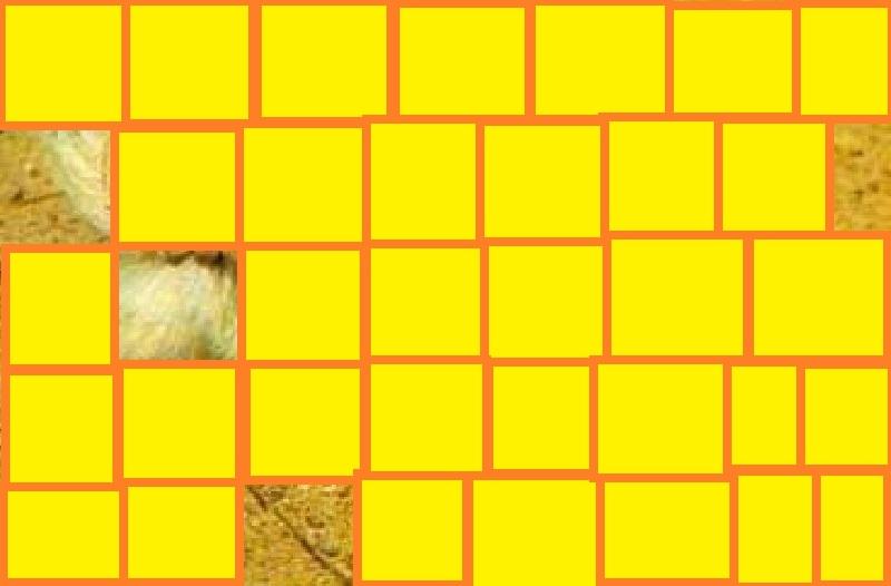 animal ptit loulou 30/12/14 trouvé par ajonc 5_110