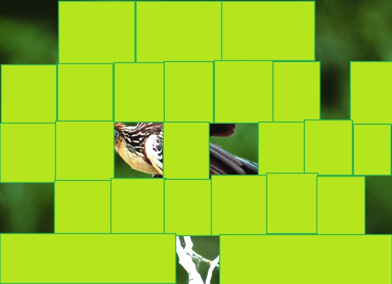 oiseau de ptit loulou le 14décembre trouvé par Martine  G_111
