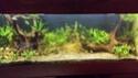 50 litres avec crevettes  003_310