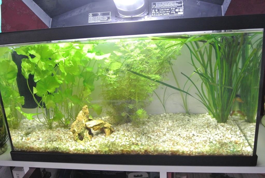 algues vertes à bulles... Dsc_4910