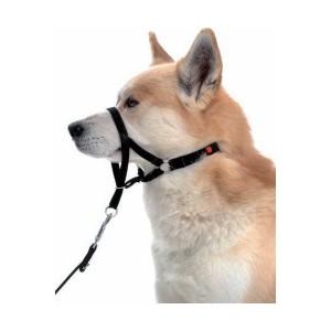Licol pour chien ! Halti-10