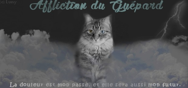 - Tableau de Missions du Clan de l'Ombre - Chat-n11