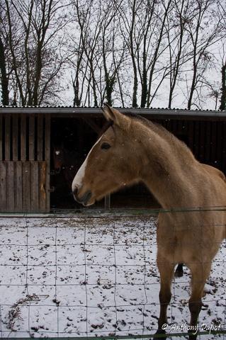 Neige en ALSACE 2014 Imgp8015