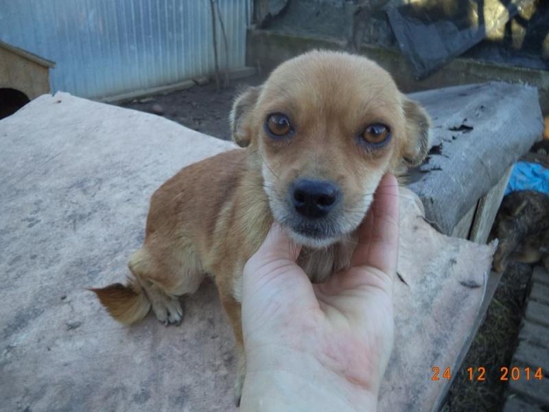 TINA, F mini x chihuahua née env 2012 (Anda) - Réservée adoption par la maman d'Astrid (dpt 67) 10885010