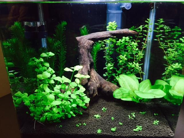 Plantes qui ne poussent plus Fullsi11