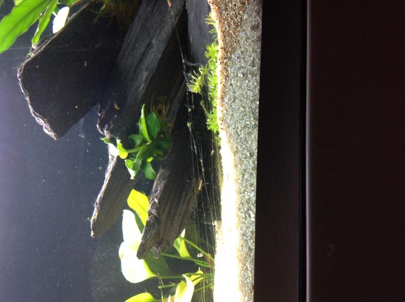 algues inquiétantes !! Image11