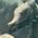 Draconifors - Afiliación Élite 35x3511