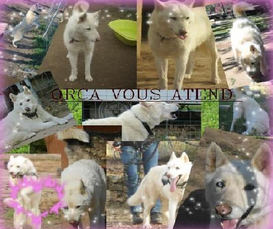 Orca, Husky, âgée de 14 ans née 20 Décembre 2000,  Eden Valley  ASSO39 - Page 4 Bloggi12