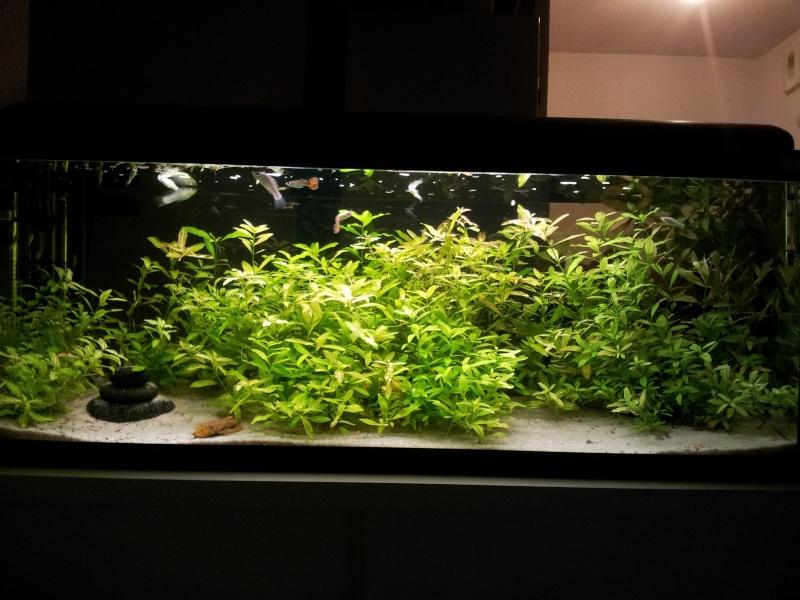 probleme disposition plante 09-12-11