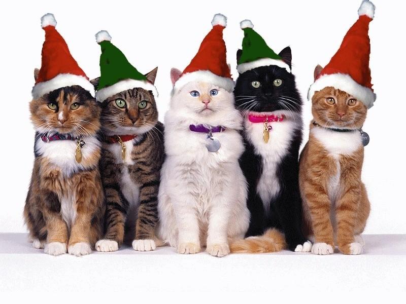 Le père Noël ammène sa hotte remplie de cadeaux pour tous les enfants sages! Gif-no12
