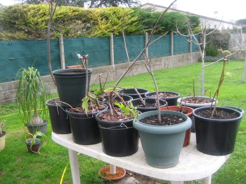 Piments, poivrons, tomates et figuiers 00510