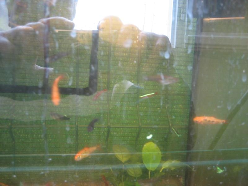 V'là mes poissons. 00911