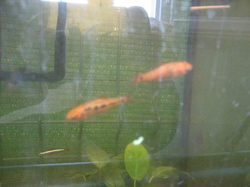 V'là mes poissons. 01312