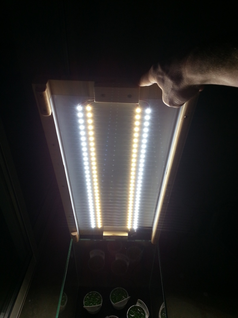 Nouvel aqua 60L eau douce Led_du10